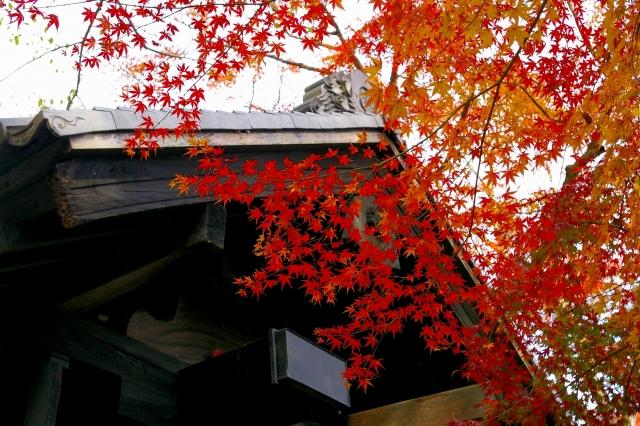 ①秋月城跡散策