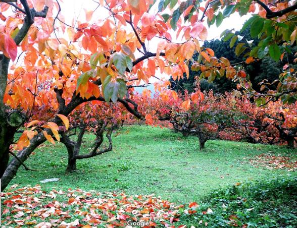 ①長野柿園