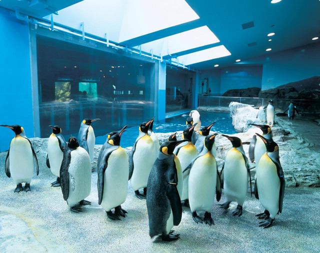②長崎ペンギン水族館